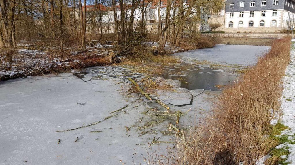 Baumfällarbeiten am Kanal im Schlosspark